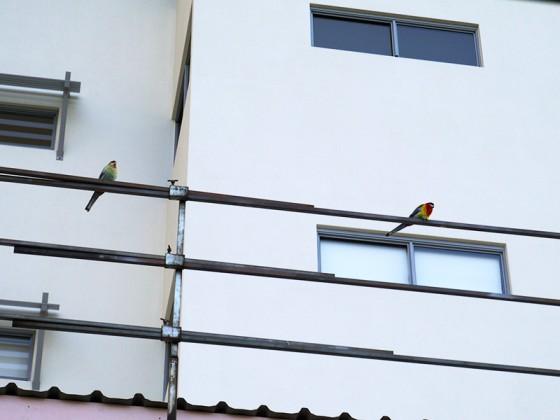 2013/03/18 Birds
