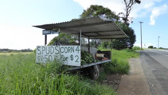2015/03/01 無人販売 トウモロコシとさつまいも