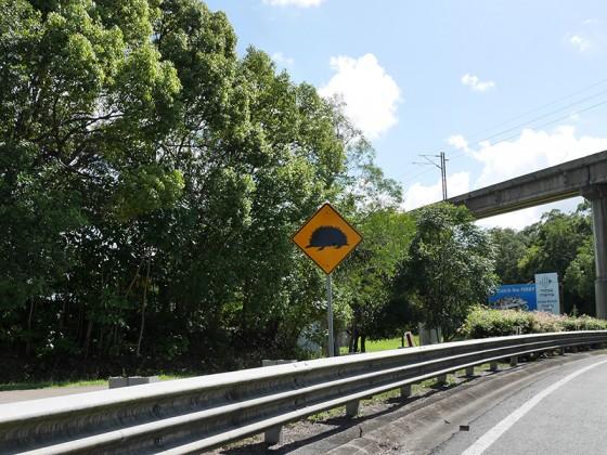 ハリモグラ注意の道路標識 オーストラリア QLD州